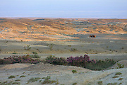 GOBI DESERT, MONGOLIA..08/28/2001.Mount Burkhan Khailaast. Landscape at sunset..(Photo by Heimo Aga).