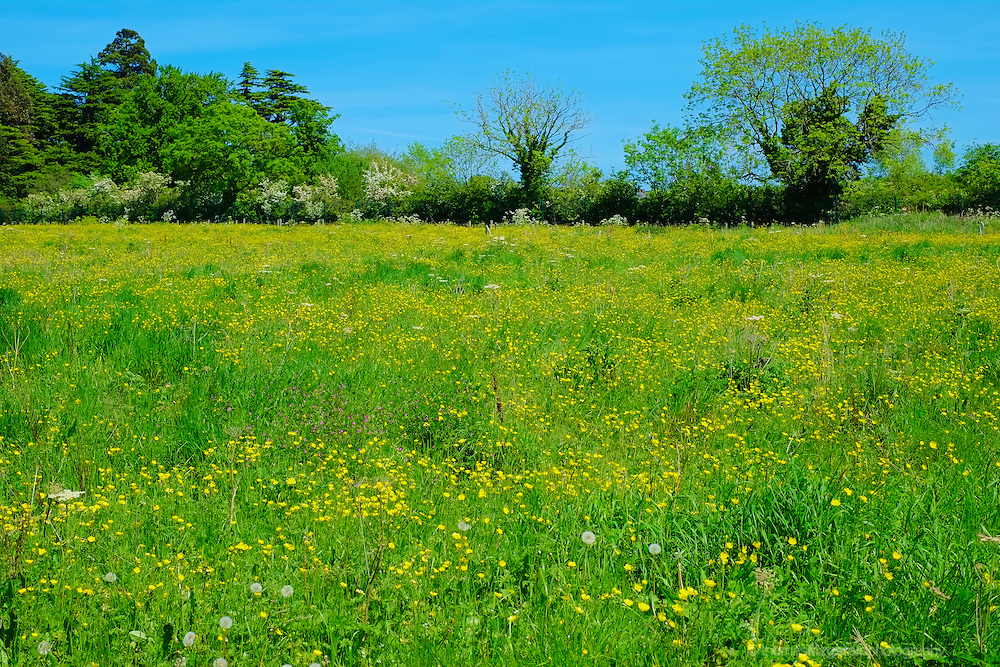 A field overgrown with wild flowers