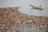 Bangladesh duck farming, 23 Oct. 2016