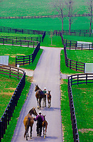 Mares and foals, Winstar Farm (thoroughbred horse farm), Versailles (near Lexington), Kentucky USA