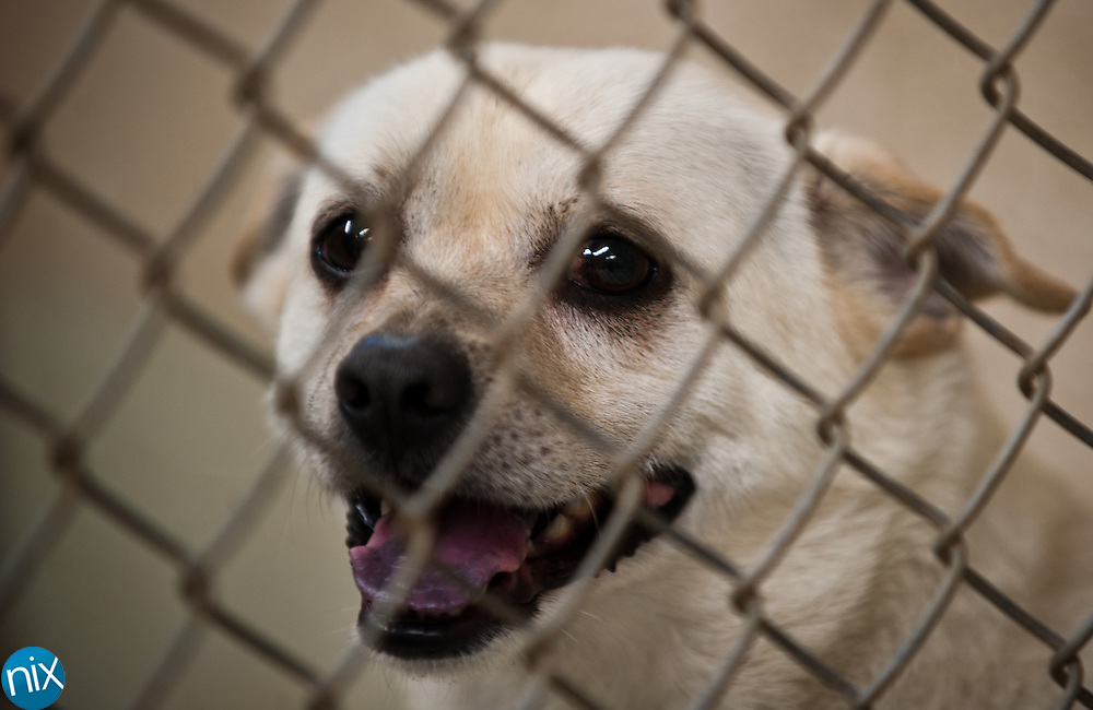 A dog at the Humane Society of Concord & Greater Cabarrus County in Concord Friday evening.