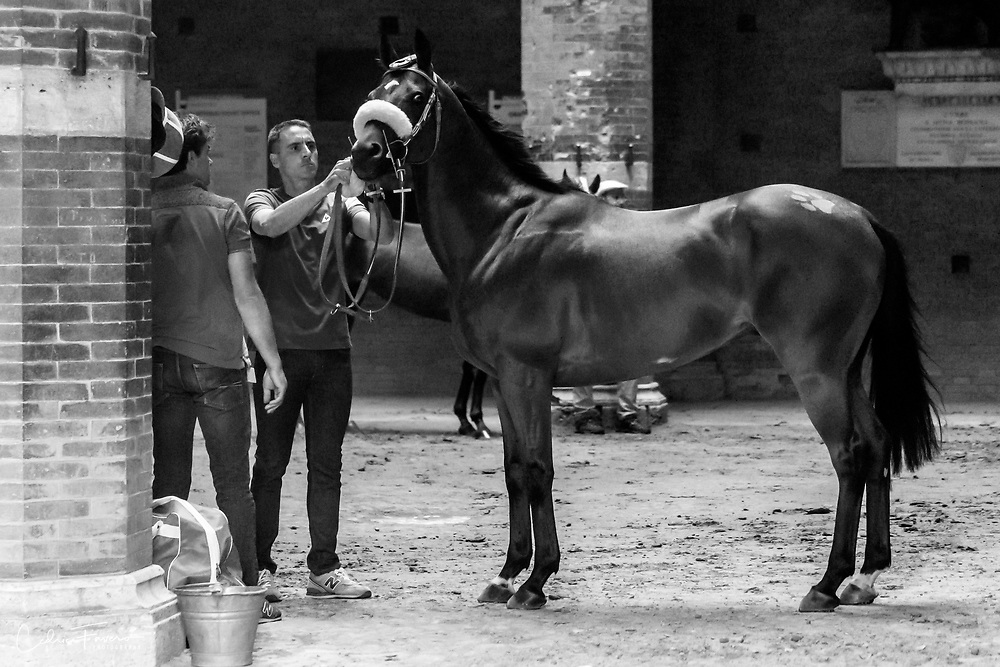 Stablemen getting the horse ready to race.