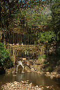 Double decker root bridge<br /> Living bridge or Root bridge (Ficus elastica)<br /> Khasi Tribe<br /> Nongriat, Khasi Hills<br /> Meghalaya, ne India<br /> Range: South China, NE India, Burma