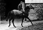 1968 - 11/03 Vincent O'Brien with 'Sir Ivor'