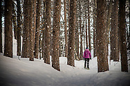 Snow shoe hiking in winter through a pine forest with falling snow near Marquette, Michigan Upper Peninsula of Michigan.