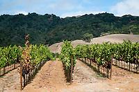 Hanna Winery Vineyards, Healdsburg, California