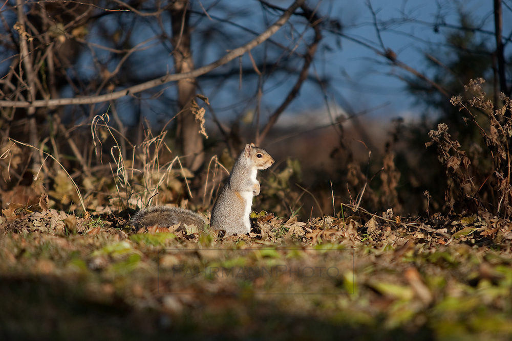 A squirrel pokes its head up to survey the landscape