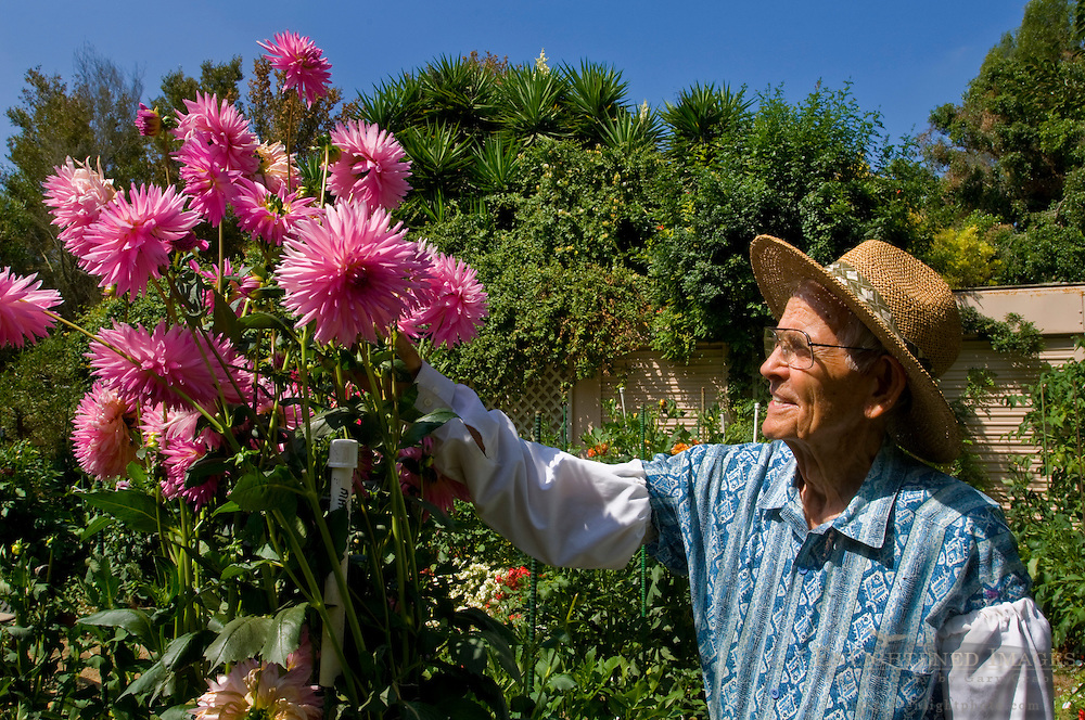 Elderly man working outdoors as volunteer gardner at South Coast Botanical Garden, Palos Verdes Peninsula, California