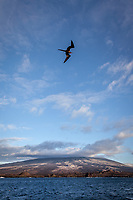 Views across Isabella Island with Frigate Bird in Flight, Galapagos
