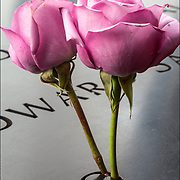 On the 15th anniversary of 9-11 at Ground Zero, 2 roses placed on the memorial plagues  by a loved ones by the name of a family member who died that day.<br /> <br /> The 2,983 names of the victims of the attacks of Sept. 11, 2001, and Feb. 26, 1993, World Trade Center truck bombing are inscribed into bronze parapets surrounding the twin memorial pools.