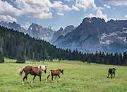 Horses walk in a green field. See the Sorapiss Group (right, 3205m/10,515 ft) across a pasture just south of Lake Misurina (address: 32041 Auronzo di Cadore), in the Province of Belluno, Veneto region, Italy. Lago di Misurina is only 14 km from Cortina d'Ampezzo. The Dolomites are part of the Southern Limestone Alps, in northern Italy, Europe. UNESCO honored the Dolomites as a natural World Heritage Site in 2009.