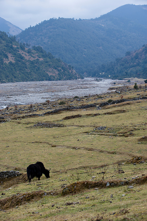 The village of Sakteng along the river Gamri Chu. Brokpa country, Bhutan.<br /> <br /> Somewhere between China and India, is located Bhutan, a longtime forgotten world, a kingdom lost in the clouds. Just east of the country, in a region still more isolated since it was opened to foreigners in 2000, the Brokpas, a small community of Yak stockbreeders, gently extirpate their isolation.