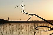 Fallen trees are a common sight around the Stechlinsee, lake in Germany. | Umgefallene Bäume sind typisch für den Uferbereich des Stechlinsees. Deutschland