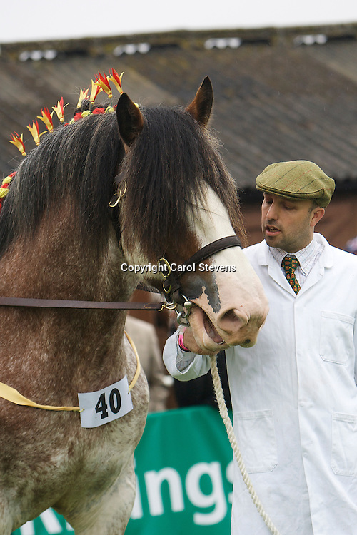 Great Yorkshire Show 2012<br /> Clydesdale Breed Classes