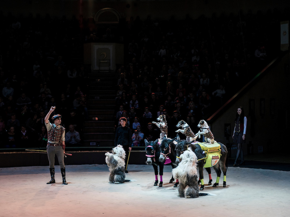 """A performer with trained dogs and donkeys at the Belarus State Circus during a show called """"Africa!?!"""" on Wednesday, November 25, 2015 in Minsk, Belarus."""