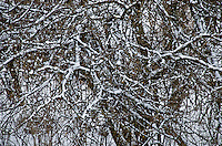 The texture of snowy branches on a tree in winter.