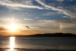 A  rare ice rainbow in the sky above the Firth of Lorne this evening. This phenomenon is known as a 'sundog' or Parhelion. A 'sundog' is formed as sunlight passes through ice crystals in the atmosphere which are usually present when thin, wispy cirrus clouds are gathering........ <br /> (c) Stephen Lawson | Edinburgh Elite media