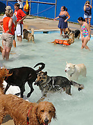 "A bunch of the fellas are having fun down at the ""puppy pool"" where they don't have to get in over their heads."
