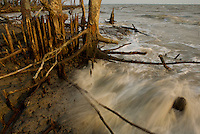 Mangroves at the edge of the Bay of Bengal on the S coast of Bangladesh.  These mangroves are battered by the sea, but are important in protecting the coast from storms and erosion.