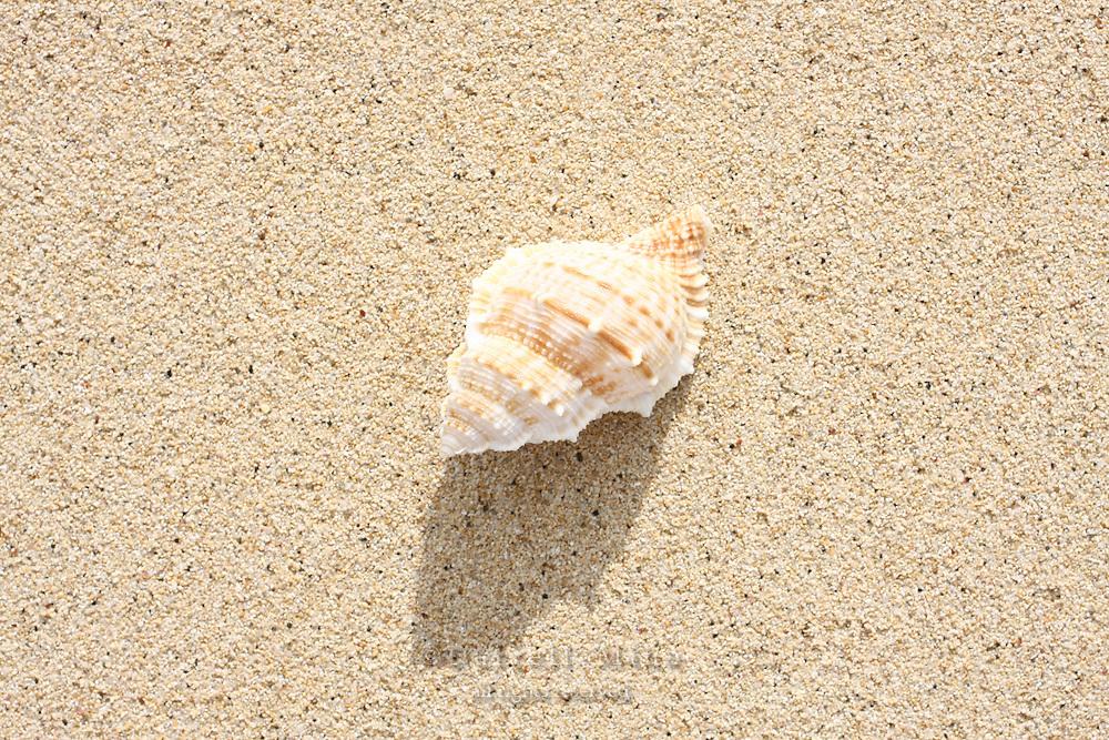 Feb 06, 2008; Honolulu, HI - Seashells at Lanikai Beach..Photo credit: Darrell Miho