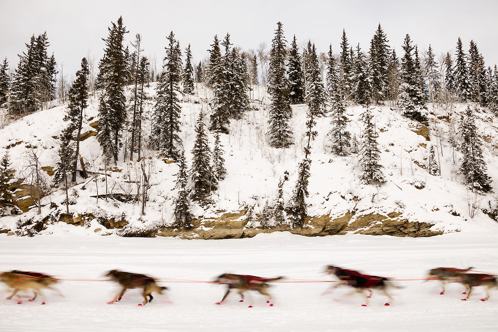 In-camera motion blur of musher Anna Berington's dogs competing in the 43rd Iditarod Trail Sled Dog Race on the Chena River after leaving the restart in Fairbanks in Interior Alaska.  Morning.  Winter.