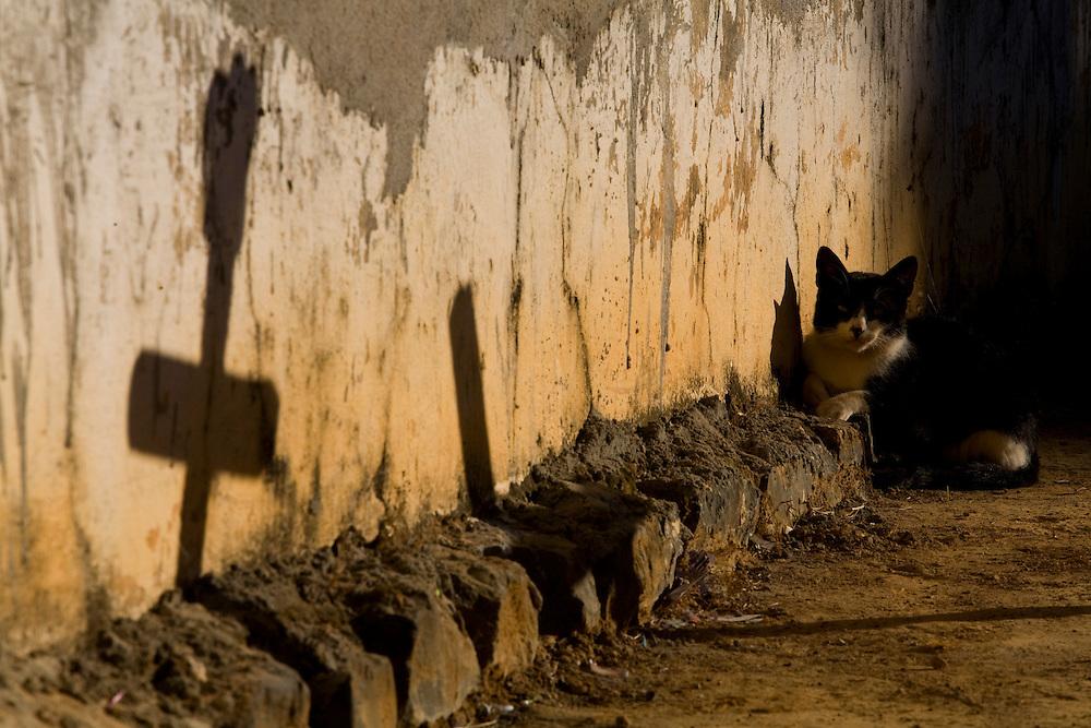 Sao Francisco_MG, Brasil...Gato proximo a uma casa no municipio de Sao Francisco, Minas Gerais...A cat next to a house  in Sao Francisco, Minas Gerais...Foto: LEO DRUMOND / NITRO