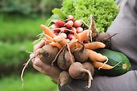 Woman holding vegetables in garden mid section side view close-up