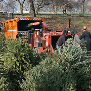 "New York City's 2008 ""Mulchfest"" took place on January 5th & 6th, 2008. Park workers and volunteers throughout the five boroughs collected Christmas trees and recycled them into mulch."