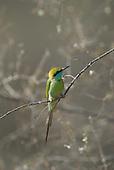 Indian Birdlife