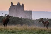 Personal Work - Lochranza Castle