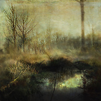 Painterly effect of woodland in english countryside