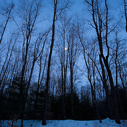 The moon as seen through bare trees in winter.  Keene, New Hampshire.