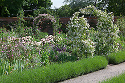 Walled rose garden at Mottisfiont.Rosa 'Snowdrift' (white) and Rosa 'Laure Davoust' (pink) growing over metal arches. Rosa 'Pink Gruss an Aachen' in the border, Rosa 'Crépuscule' on wall beyond. Low lavender hedges