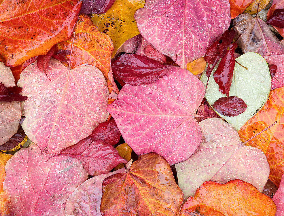 raindrops on colorful autumn leaves design