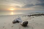Piece of tree branch on the beach at dawn. Pacheca Island, Las Perlas Archipelago, Panama, Central America.