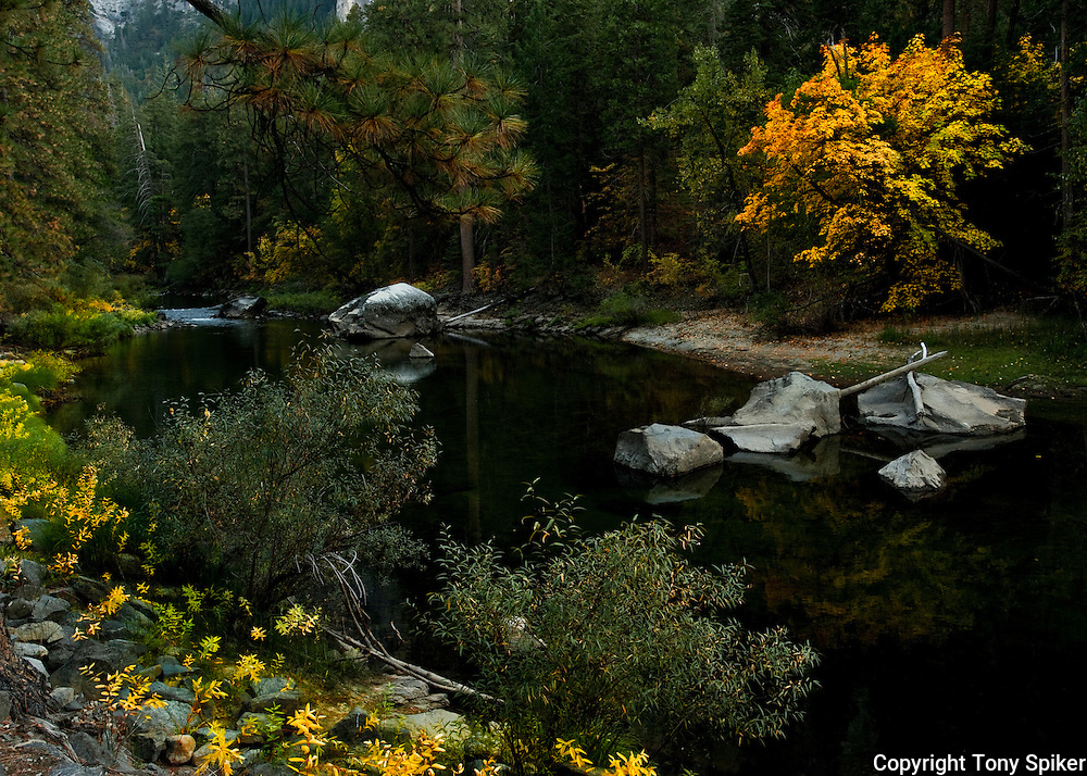 """Fall Colors Along the Merced River 2"" - Leaves changing along the Merced River, Yosemite Valley"