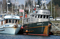 Fishing boats in harbour at Quadra Island, British Columbia, Canada   Photo: Peter Llewellyn