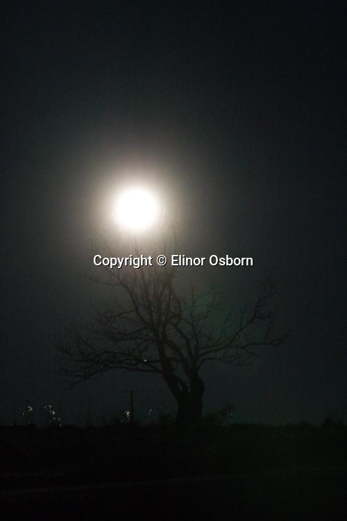 Super Moon setting behind apple tree