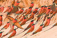 African land bird photos