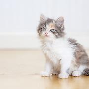 20150914 Kittens Studio