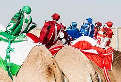 Robot remote controlled jockeys at camel races at Dubai Camel Racing Club at Al Marmoum in Dubai United Arab Emirates