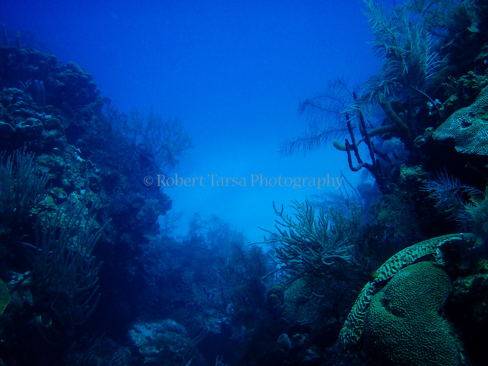 Belize reef seascape