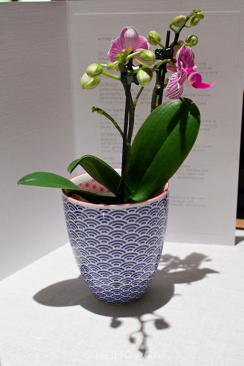 Berlin, Germany. Restaurant Tim Raue.<br /> Flower pot at the table.
