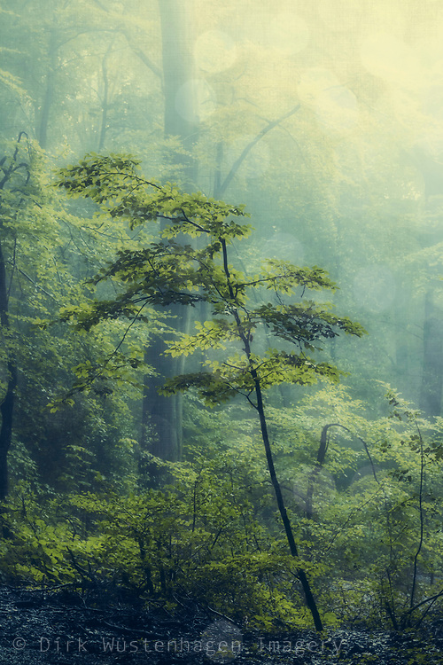 small tree in a forest at sunrise