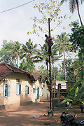 local electrician fixing the electric line on a makeshift pole, India, Kerala, a state on the tropical coast of south west India