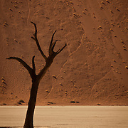 Dead Acacia in Deadvlei Salt Pan, Namibia.