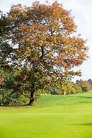 VELDHOVEN - Boom op yellow 1. Golfbaan Gendersteyn Burggolf.  COPYRIGHT KOEN SUYK