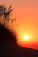 Silhouette of sea oats and sand dunes against  a orange colored sunrise sky and surf on a Outer Banks beach.