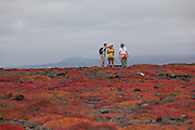 Tourists take in the view on South Plaza Island while surrounded by orange Sesuvium plants (Sesuvium edmondstonei). Galapagos Archipelago - Ecuador.