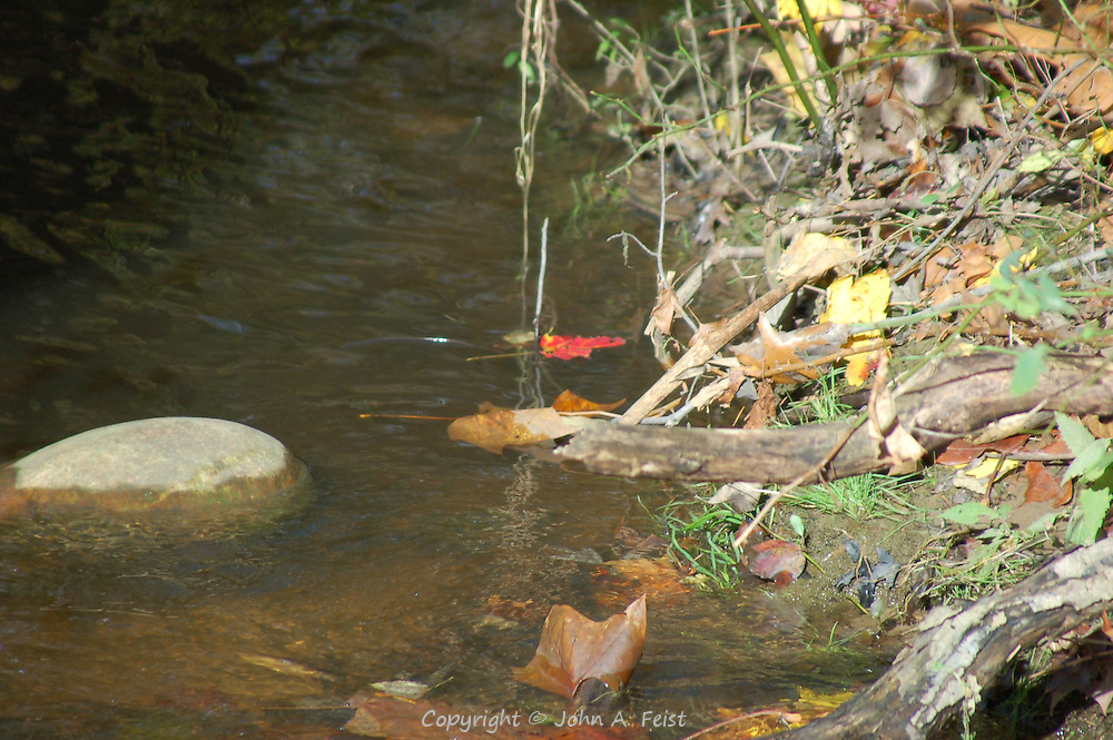 A few of the multicolored leaves that fall onto and along the D and R Canal in fall.  Hillsborough, NJ